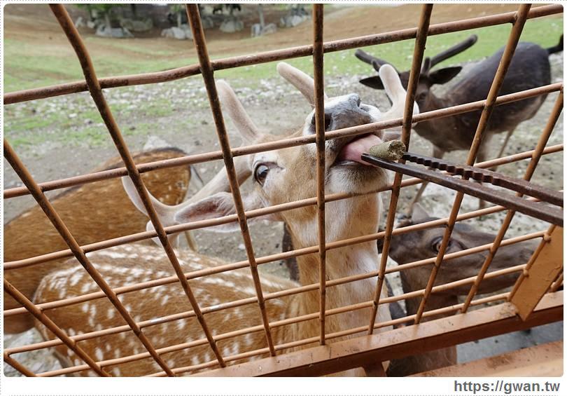 [日本景點●九州] 大分縣 九州自然動物公園 アフリカンサファリ — 餵小鹿、獅子、大象吃東西,還可以抱小獅子唷 ❤