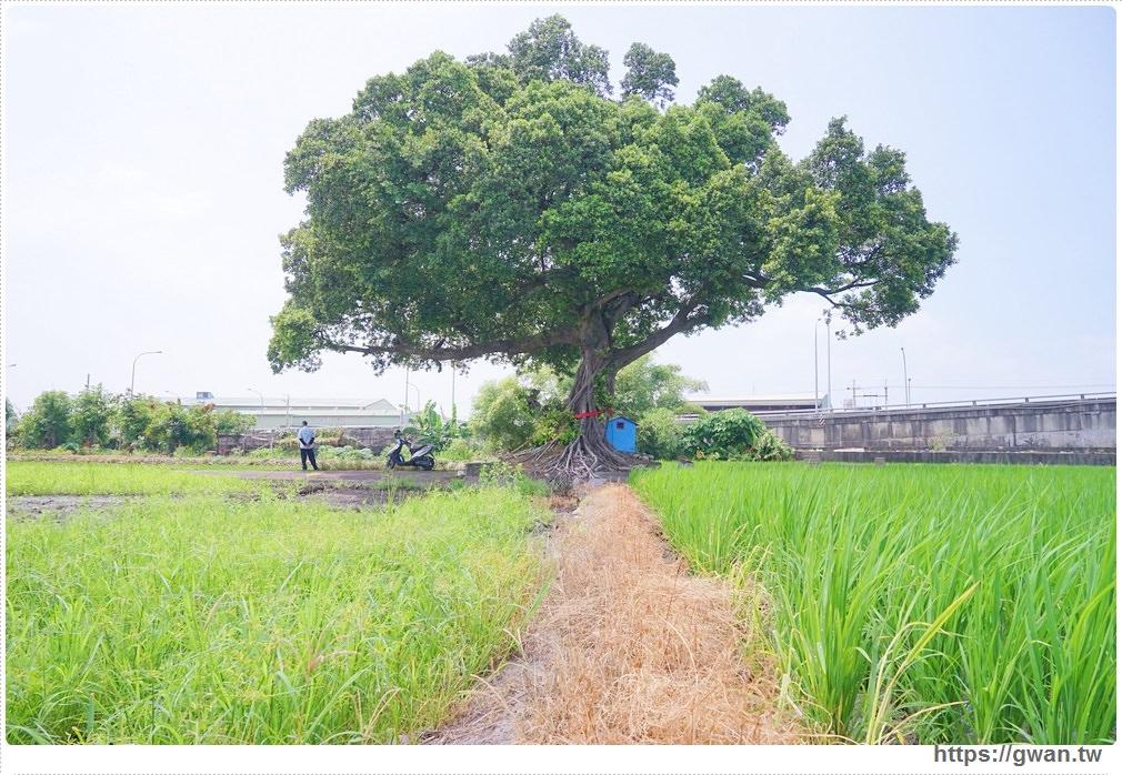 20170907003501 68 - 真的不是在台東,這裡也有金城武樹!!