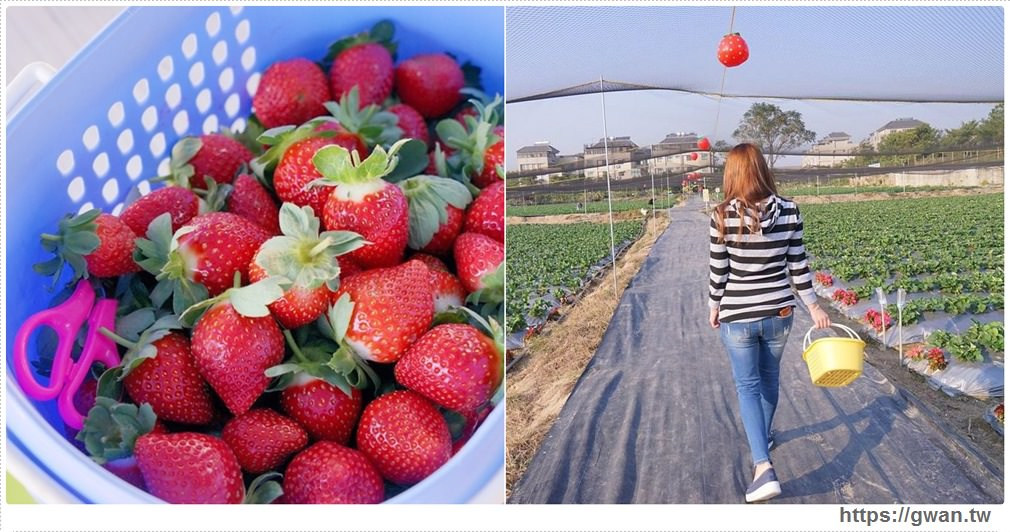 20180225145017 90 - 台中也能採草莓囉,就在潭子草莓世界!