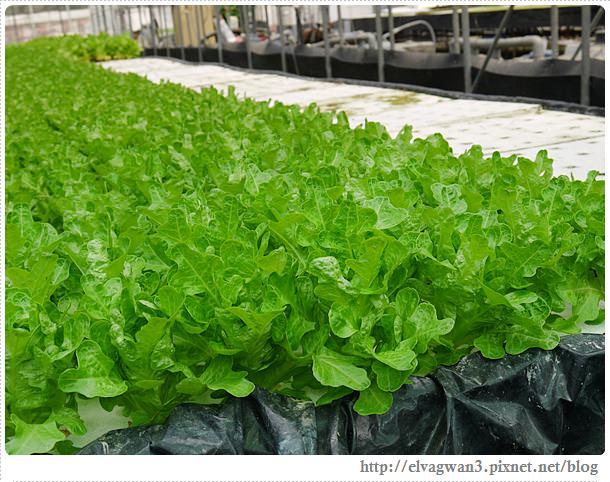 彰化閃爍西南角-番挖農場-蔬菜花園-20(綠橡)