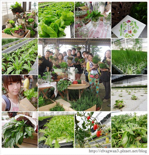 彰化閃爍西南角-番挖農場-蔬菜花園-1