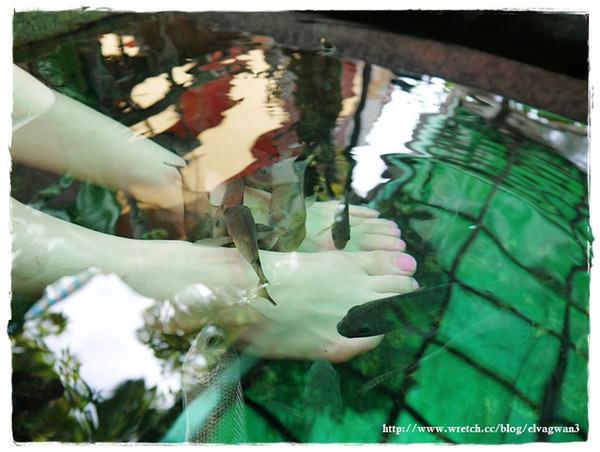 宜蘭, 礁溪, 湯圍溝, 湯圍溝溫泉公園, 溫泉魚, 泡腳, 去腳皮, 去角質, 咬咬魚, 宜蘭景點, 溫泉魚吃腳皮, 溫泉魚泡腳推薦, 泡溫泉, 冒煙的石頭, 湯城圍爐, 黑旋風, 宜蘭旅遊, 礁溪景點-21