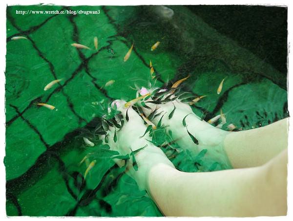 [宜蘭景點●礁溪] 湯圍溝溫泉公園 — 溫泉魚咬咬初體驗,擺脫厚重腳皮,迎接光滑的腳ㄚ兒吧 ~